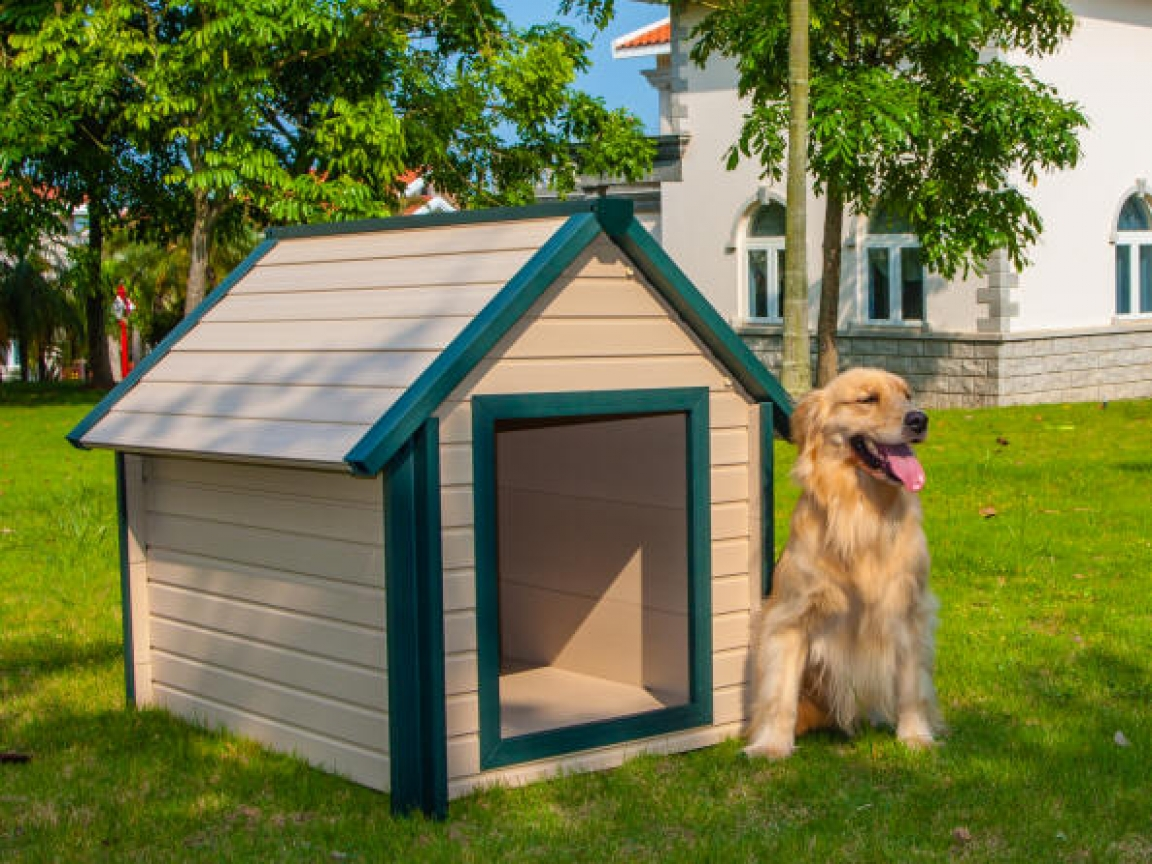 Build Your Own Dog House Easy