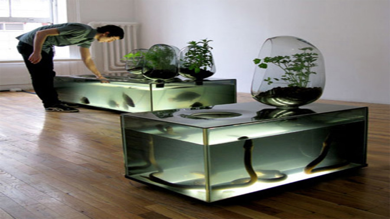 Indoor bamboo plants indoor plants with aquarium fish tank for Well designed homes