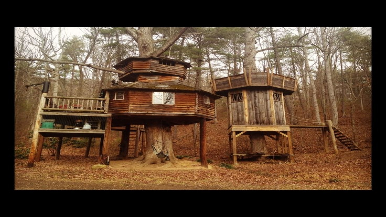 House Hunting Deer Tree Stands Tree Houses For Adults